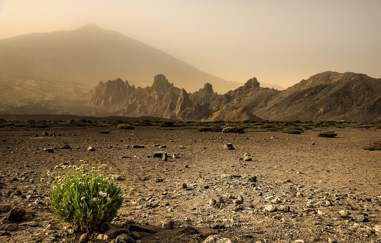 Фото обои трава, пейзаж, природа, пустыня
