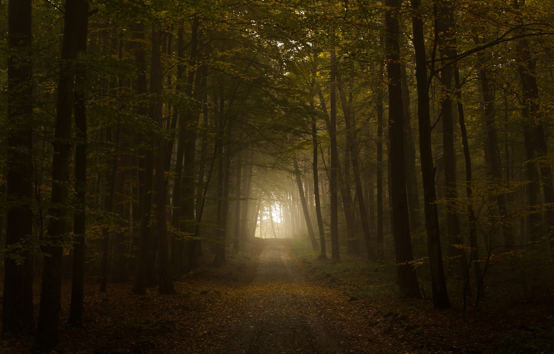 Фото обои дорога, осень, свет, листва, тунель, the road