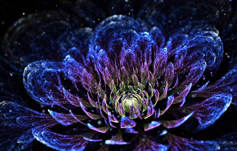 Обои абстракция, цветок, хризантема. Абстракции foto 6