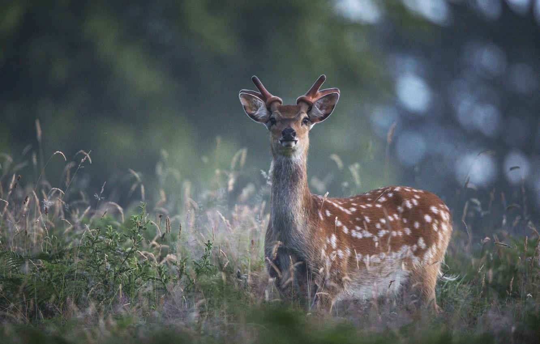 Фото обои трава, блики, олень. природа