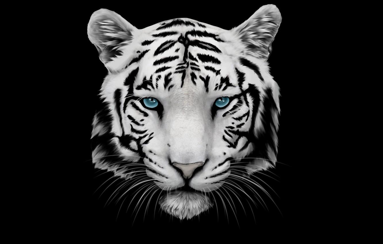 Фото обои белый, усы, морда, тигр, голова, tiger