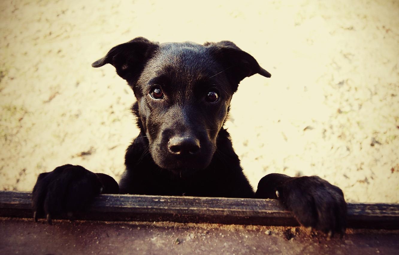 Фото обои песок, собаки, собака, лапы, нос, Пес
