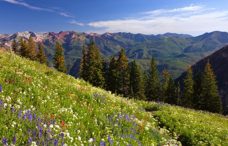 пояснил фото альпийского луга предназначена для
