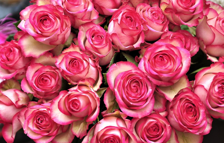 Розы розовые картинки охапка