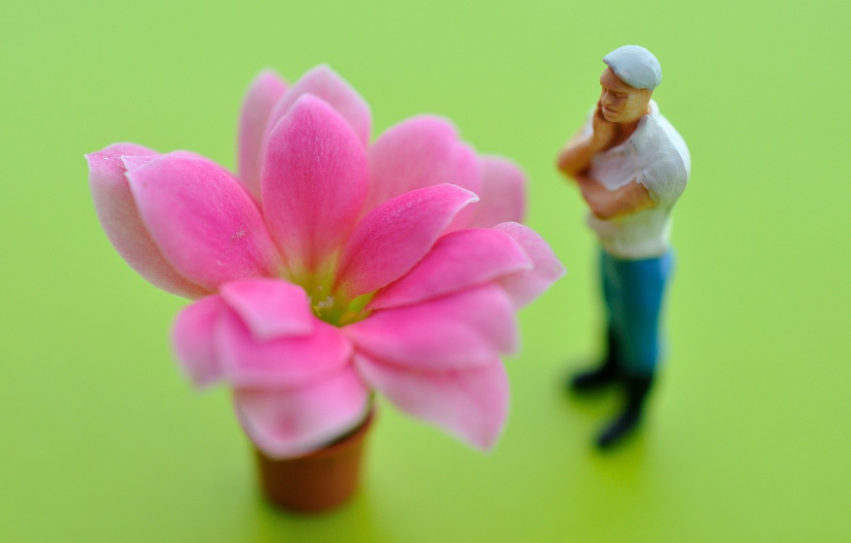 Фото обои flower, petals, observer
