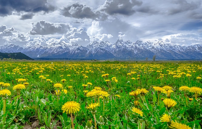 Фото обои снег, цветы, горы, тучи, одуванчик, луг