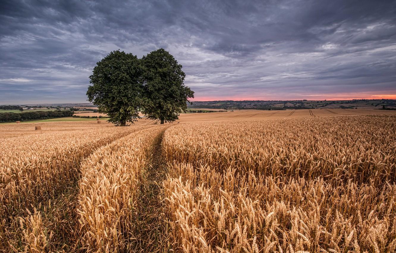 дочка, радость пшеница красивые фотографии около старые
