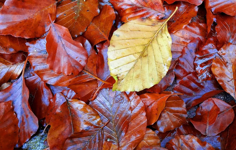 Осенние листочки фотографии