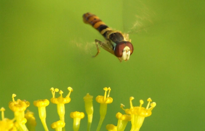 Фото обои зелень, муха, Цветок