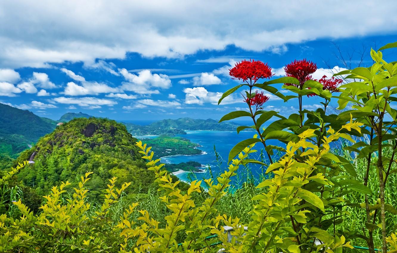 Фото обои облака, деревья, пейзаж, цветы, горы, природа, кустарники