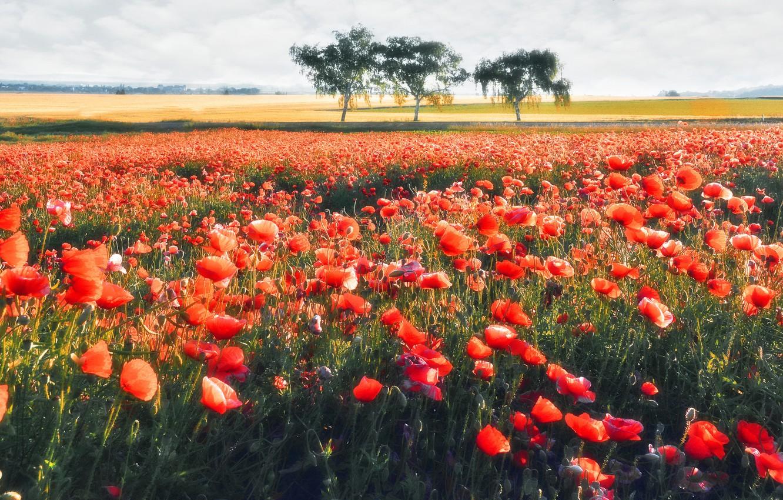 фасоны маковые поля в голландии фото основном утяжелители