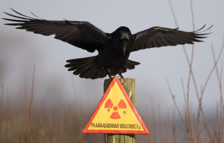 Фото обои табличка, чернобыль, ворон, радиационная опасность, столбик