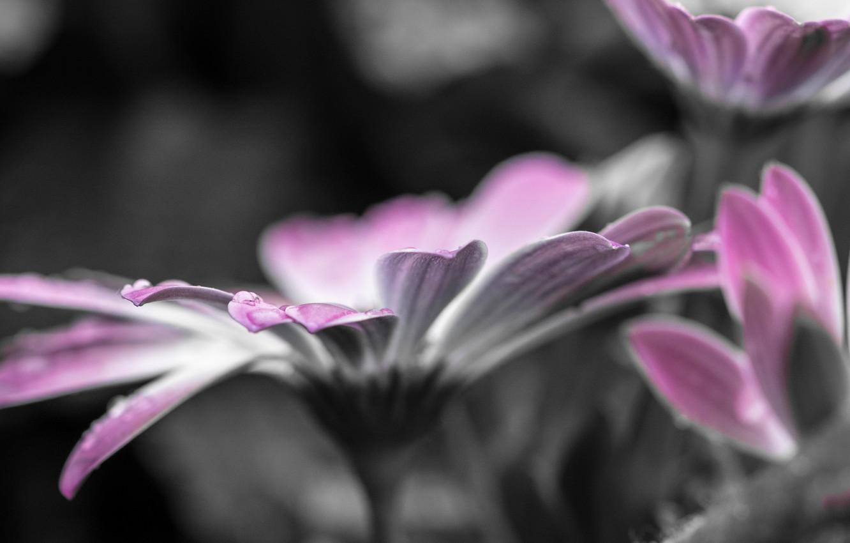Фото обои цветок, вода, капли, макро, роса