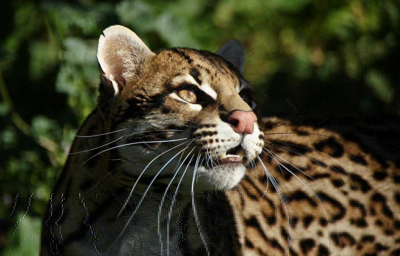 молодую интересные картинки кошачьих широкомасштабные клинические