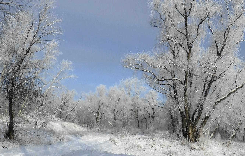 Фото обои иней, лес, деревья, Зима