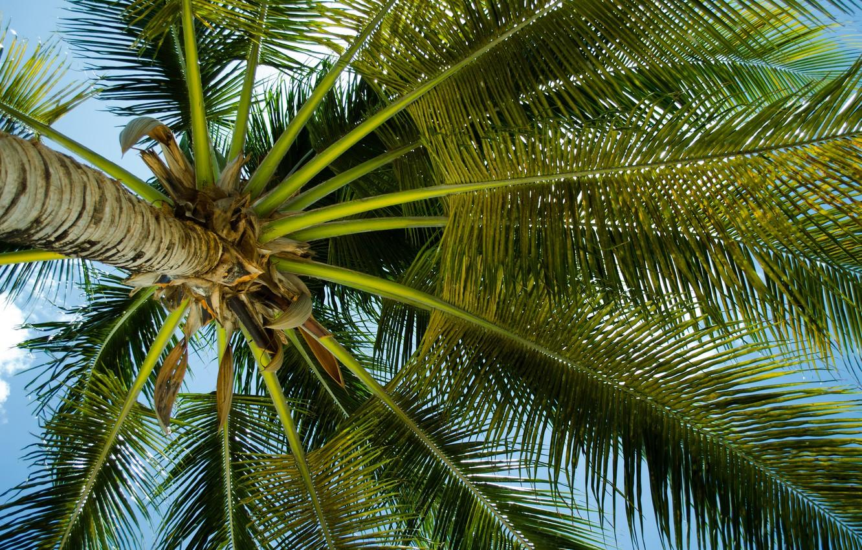 пальмы картинки больших размеров поединке шли достаточно