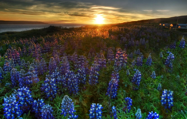 Фото обои пейзаж, закат, цветы