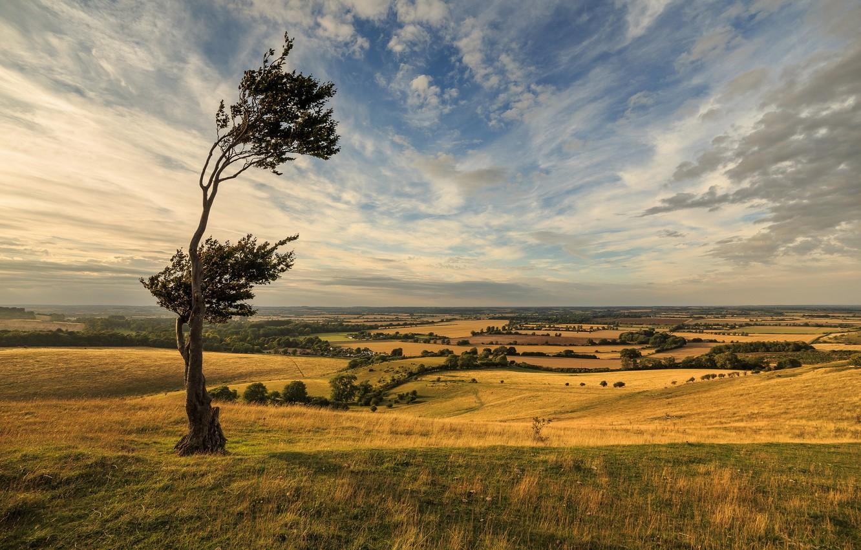 Фото обои Landscape, Tree, Windy Day, Dramatic Sky