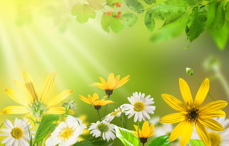 Фото обои лето, листья, цветы, желтый, природа, зеленый, ромашка, ярко, красочно