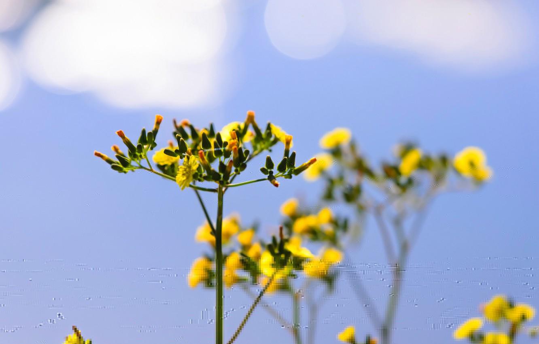 Фото обои цветок, небо, облака, растение