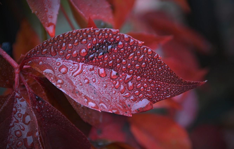 макро фото листьев изделия отлично подходят