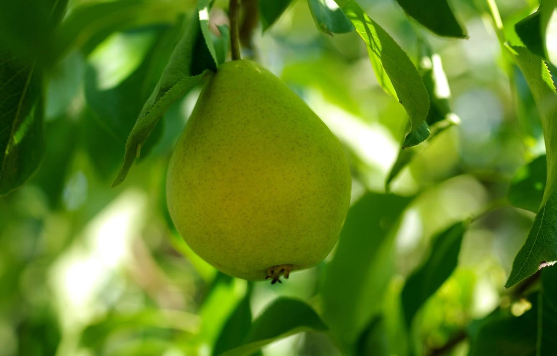 Картинки зеленого груша