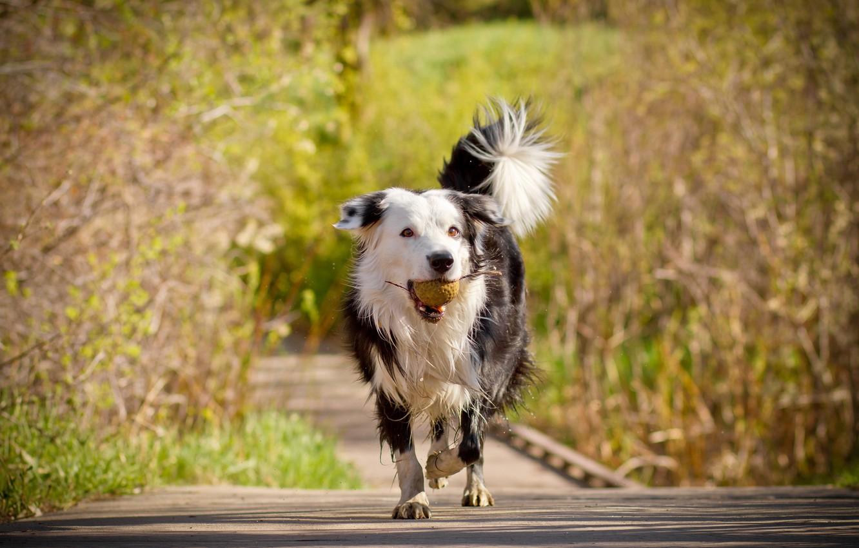 Обои Собака, мяч, друг. Собаки foto 10