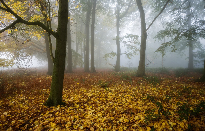 Фото обои осень, лес, туман