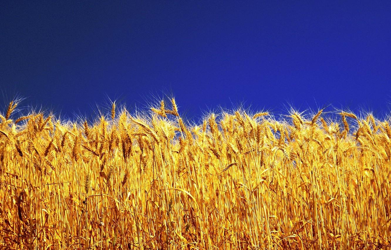 Фото обои небо, яркие краски, желтая трава