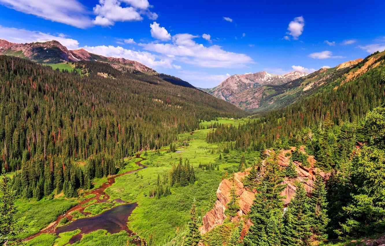 сильно отличалось американский лес фото это касается процесса