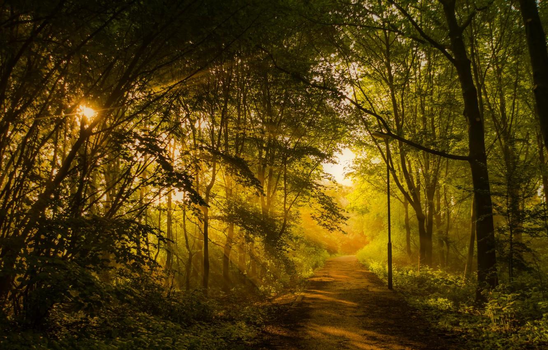 Лучи солнца в лесу картинки и фото