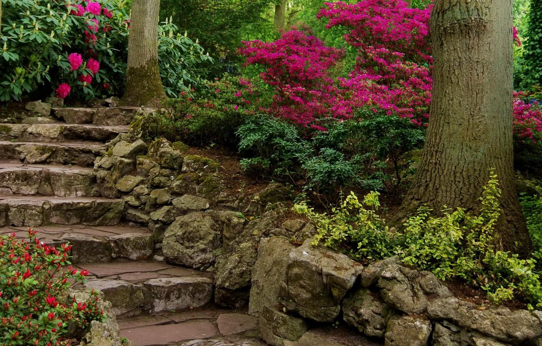 Обои цветы, сша, кусты, ball ground gibbs gardens. Природа foto 15