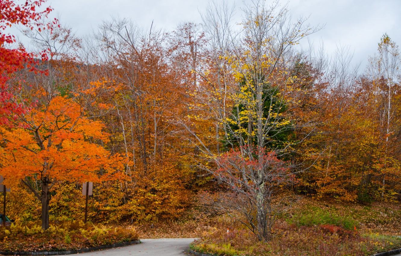 Фото обои дорога, лес, colors, Осень, forest, road, autumn, fall