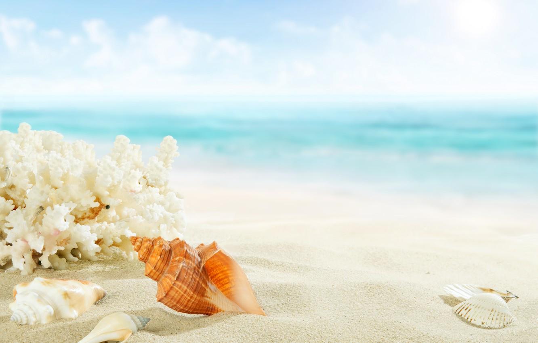 можно красивая картинка море песок ракушки что