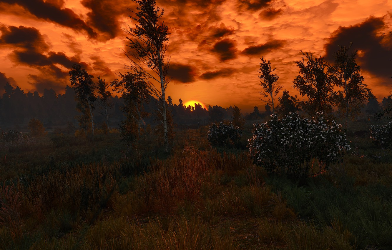 Фото обои охота, ведьмак, дикая, The Witcher 3: Wild Hunt)