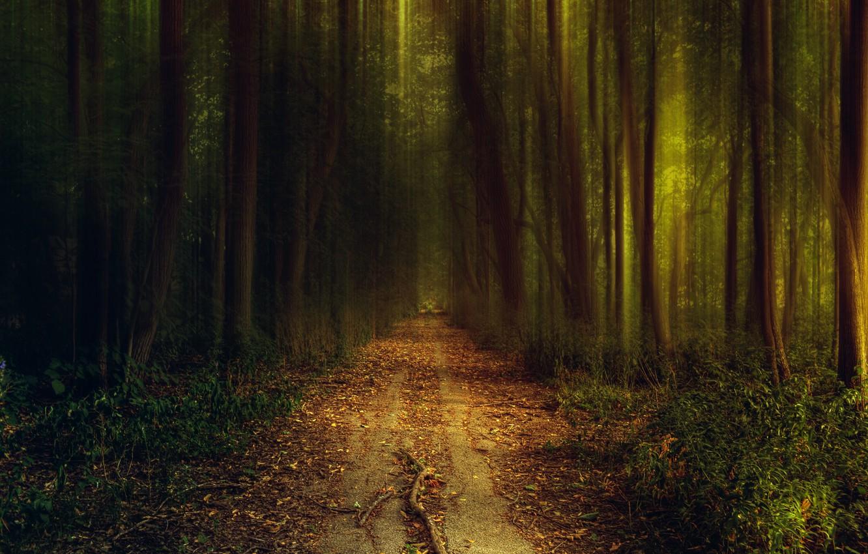 Фото обои дорога, зелень, осень, лес, трава, свет, деревья, природа, вечер, тропинка, кусты