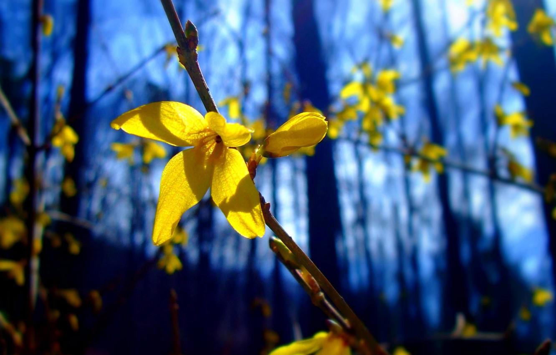 Фото обои лес, цветок, ветка, лепестки