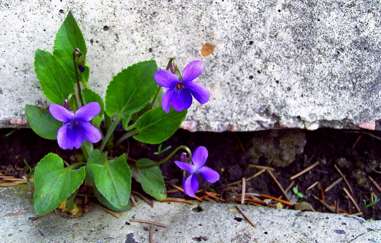 Фото обои листья, цветы, камни, лепестки
