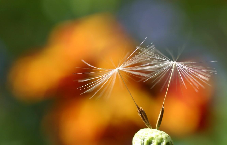 Фото обои Flower, nature, beautiful, scene