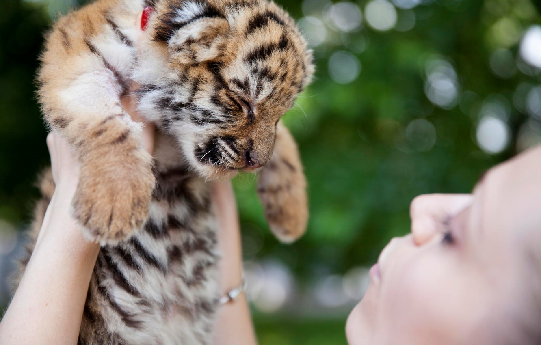 Картинки тигренок и котенок