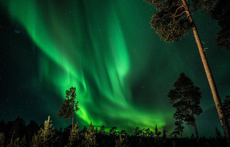 Фото обои лес, небо, звезды, деревья, ночь, северное сияние, Финляндия