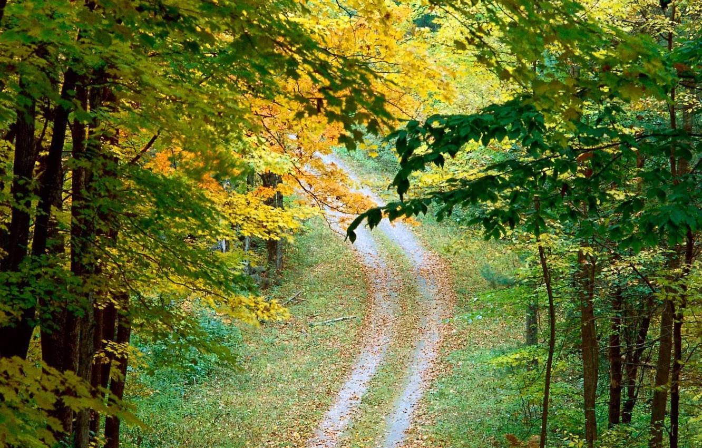 Фото обои дорога, осень, деревья, Листья
