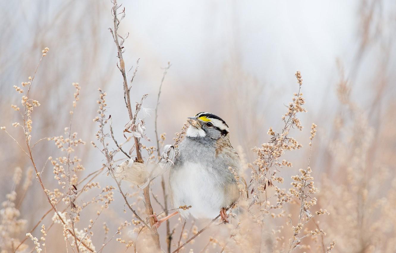 Обои Птичка, семена. Животные foto 9