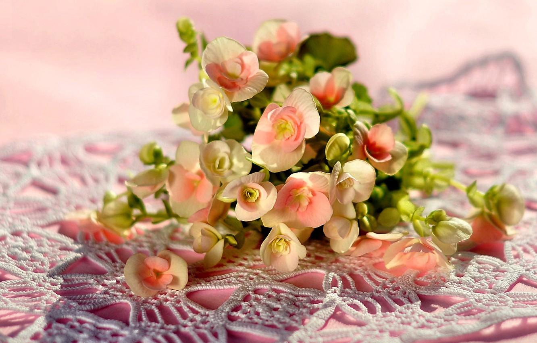 Фото обои фото, Цветы, Букет, Бегония