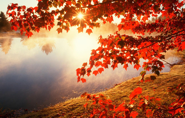 Фото обои осень, листья, солнце