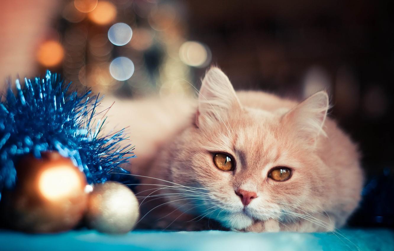 Фото обои кот, праздник, шары, игрушки, новый год, мишура, боке