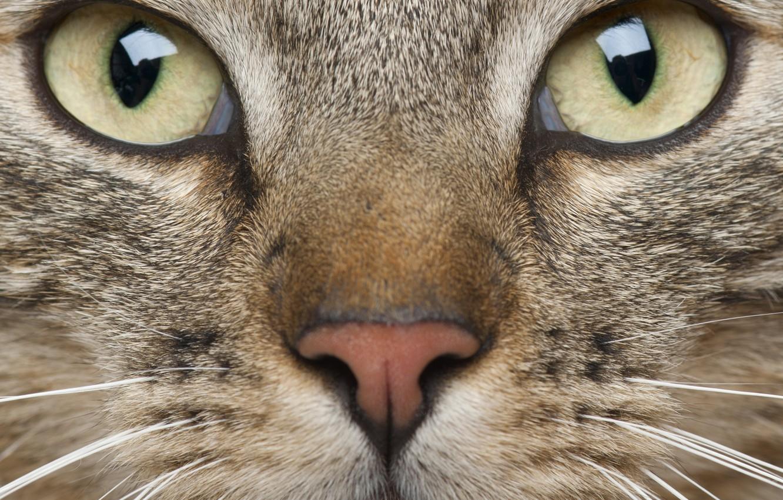 картинки кошачьего взгляда дам что нужно