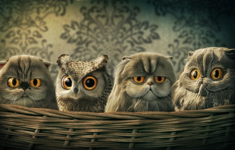 кошек картинки совы и котенка стоит сочетать вещи