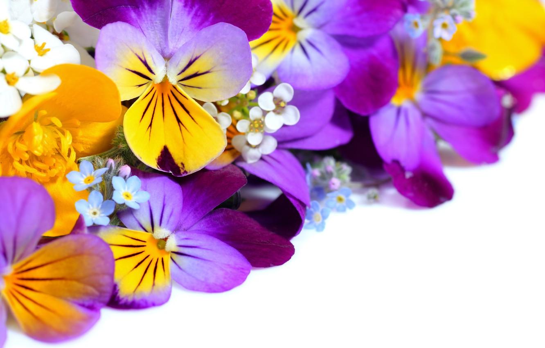 Фото обои цветы, анютины глазки, yellow, garden, violet, white background, Viola