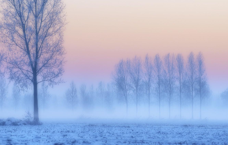 Фото обои иней, поле, снег, деревья, закат, туман, сиреневый, розовый, голубой, Зима, дымка, сумерки
